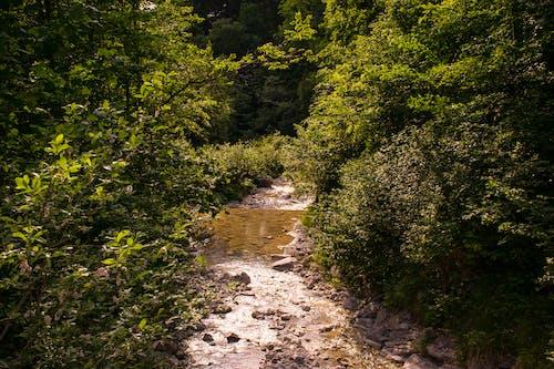 Gratis lagerfoto af bayern, bjerg, natur, naturfotografering