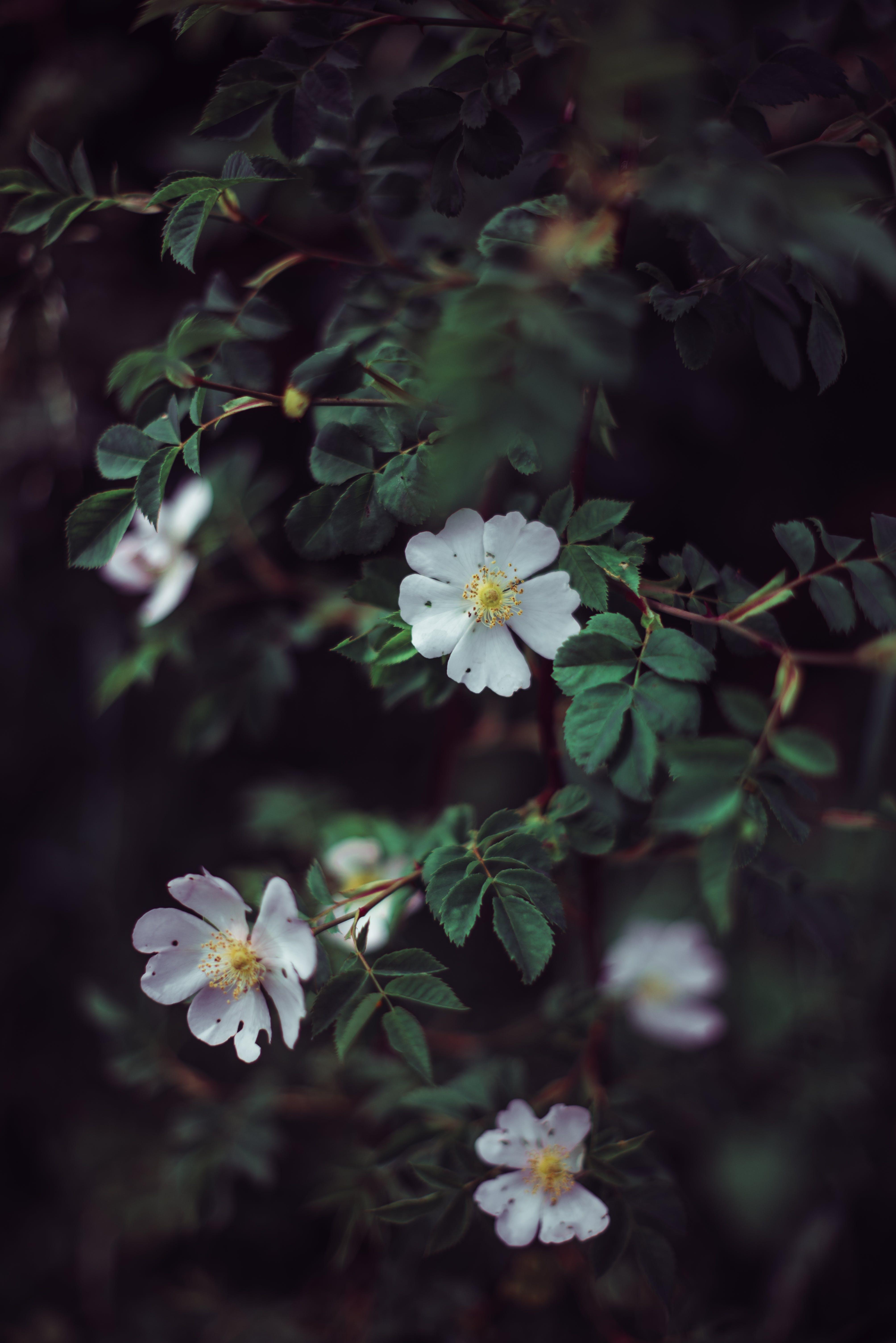 5 Petaled Flowers