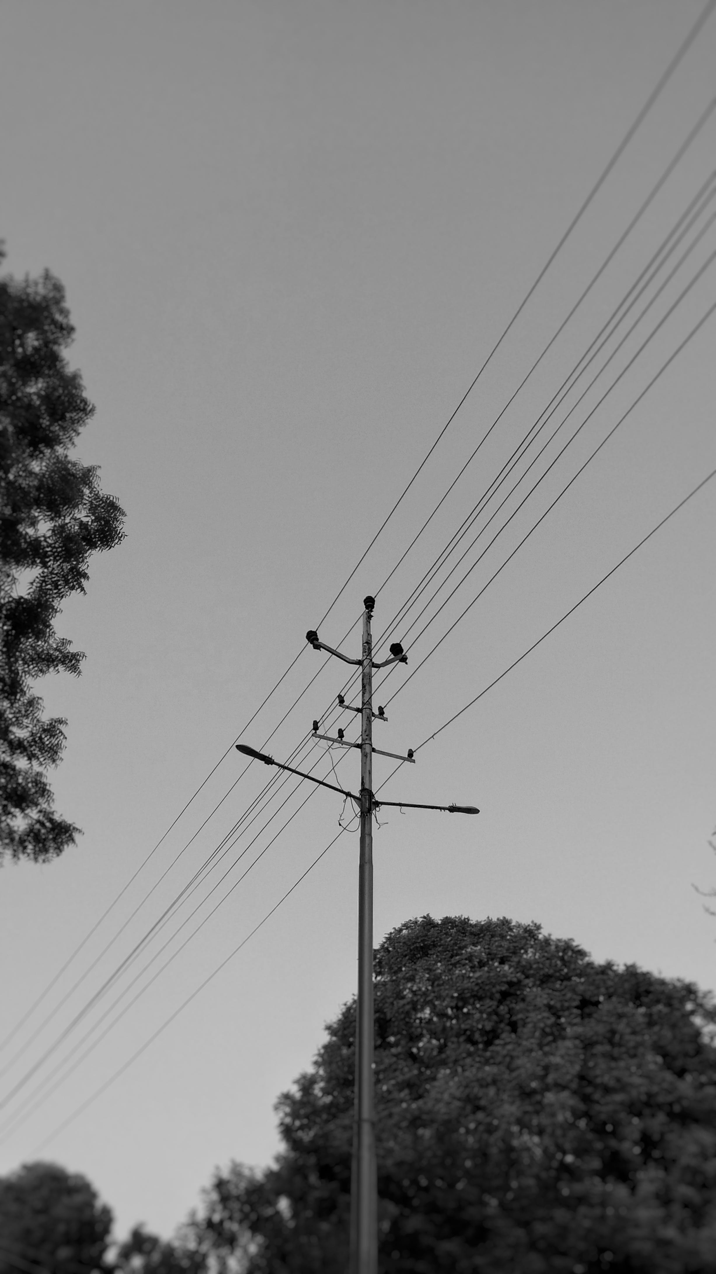 Free stock photo of black and white, cables, electricity, focus