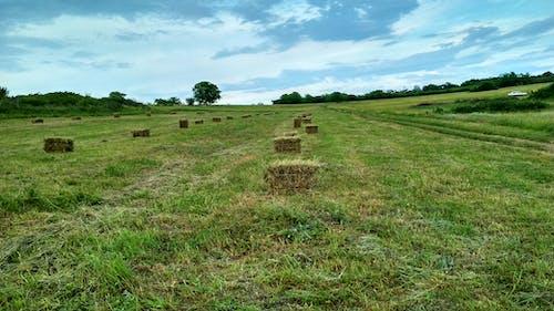 Бесплатное стоковое фото с деревня, поле, сено, трава