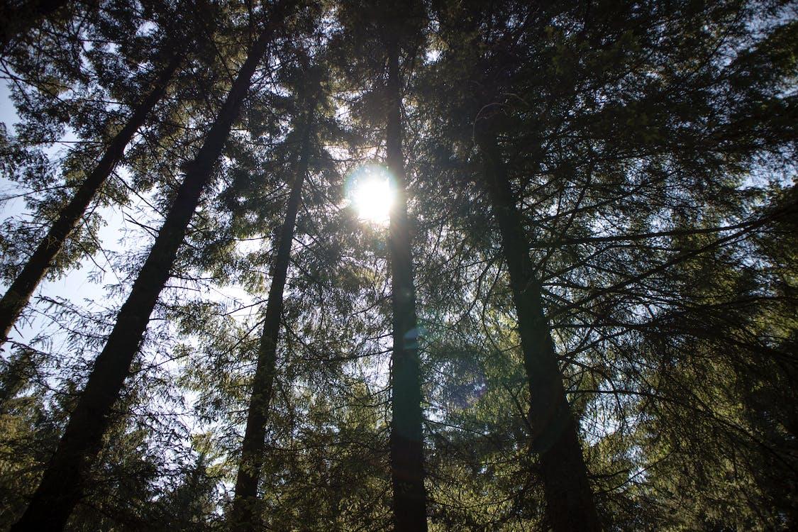 arboles, bosque, foto de ángulo bajo