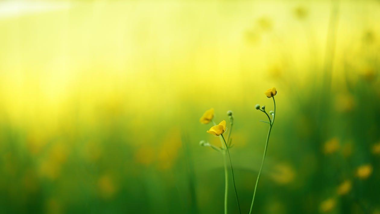 Selektives Fokusfoto Von Gelben Blütenblättern