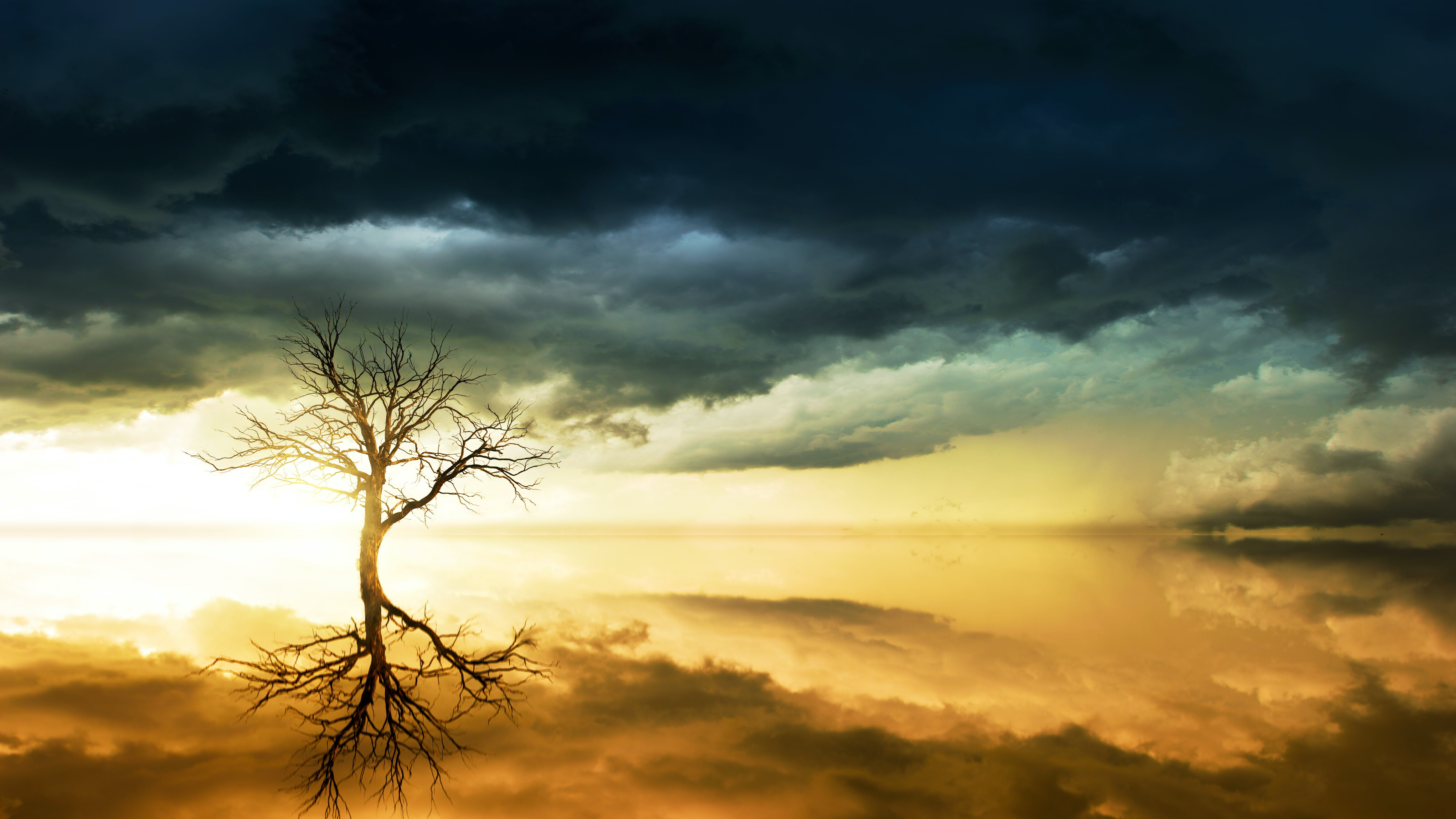 Photo of Bare Tree Under Cloudy Sky