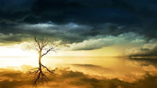 Ingyenes stockfotó csupasz fa, drámai, fa, felhők témában