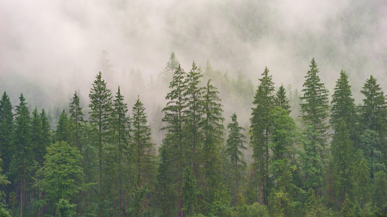 Gratis lagerfoto af dagslys, natur, skov, tåget