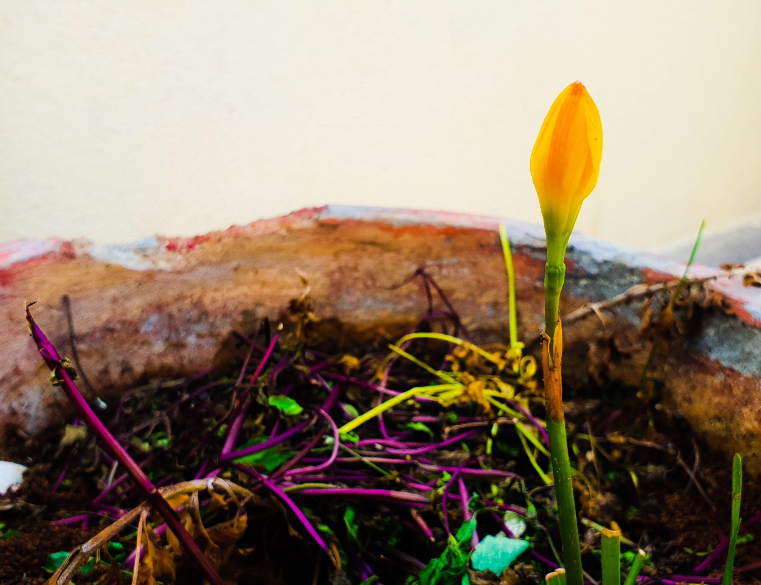 Gratis lagerfoto af blomst, blomst tapet, blomsterpotte, blomstervase