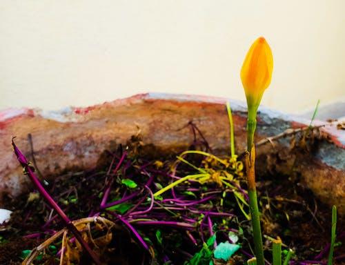 Foto profissional grátis de aleatória, bonitinho, flor, fotografia de pequenos seres