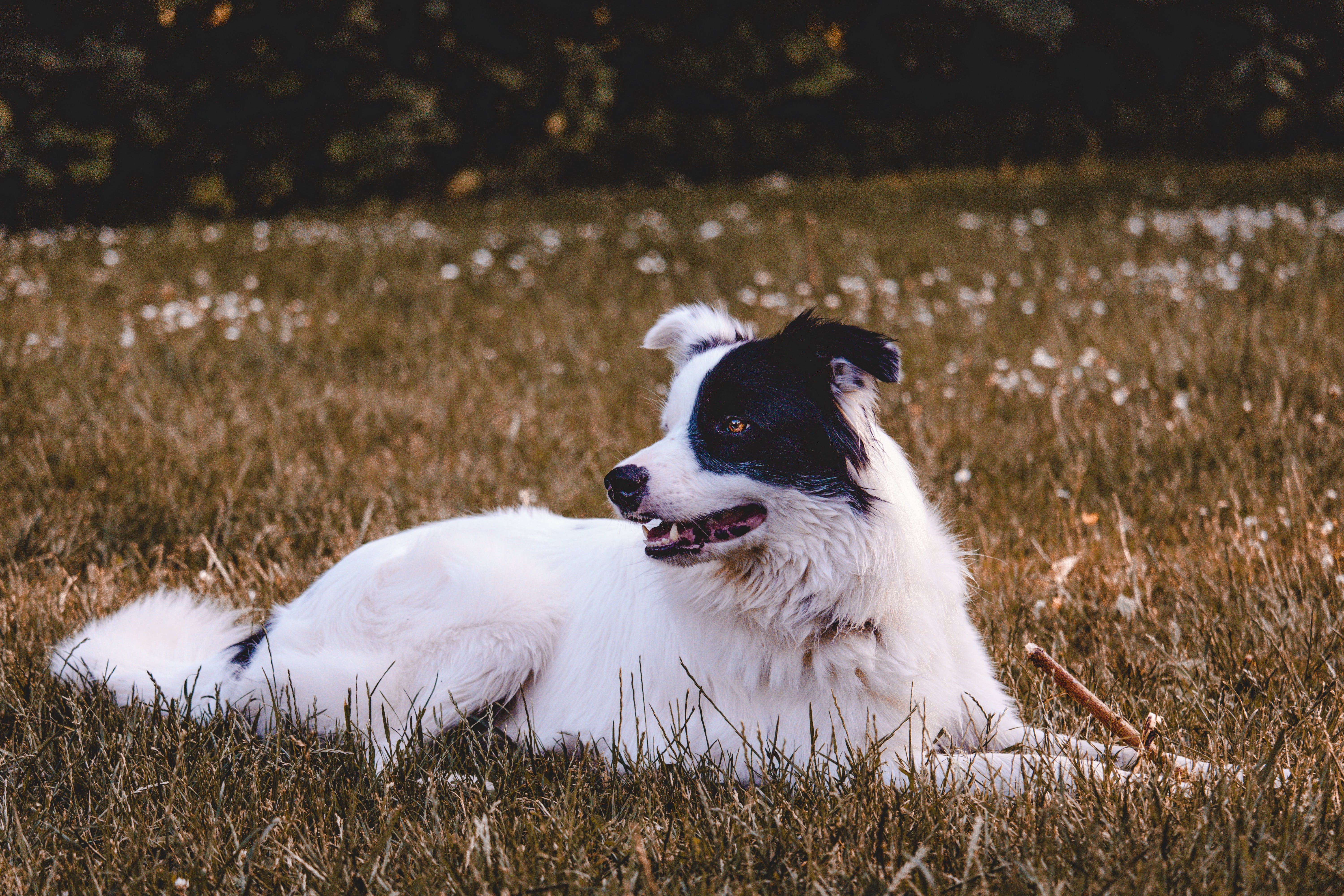 Black And White Dog On Grass Field
