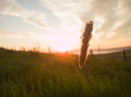 Fotos de stock gratuitas de planta, tomando el sol