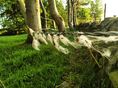 Fotos de stock gratuitas de alambre de espino, alambre de púas, lana