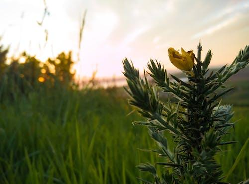 Gratis stockfoto met gele bloem, puntig