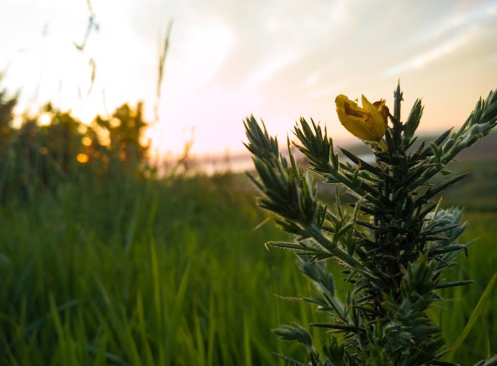 Fotos de stock gratuitas de flor amarilla, puntiagudo