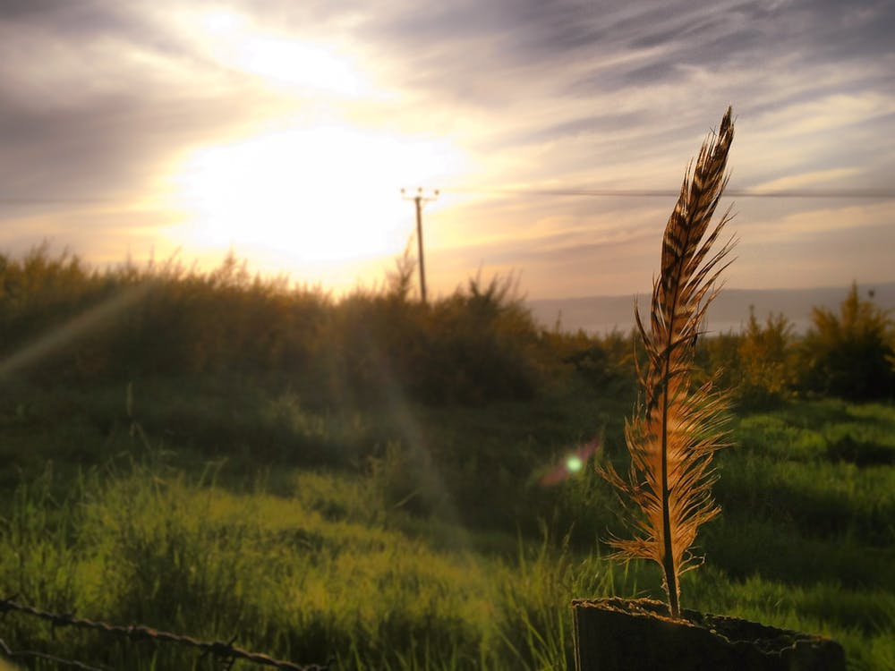 Gratis stockfoto met gouden zon, oranje veer
