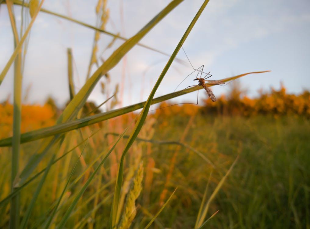 Základová fotografie zdarma na téma hmyz, stéblo trávy
