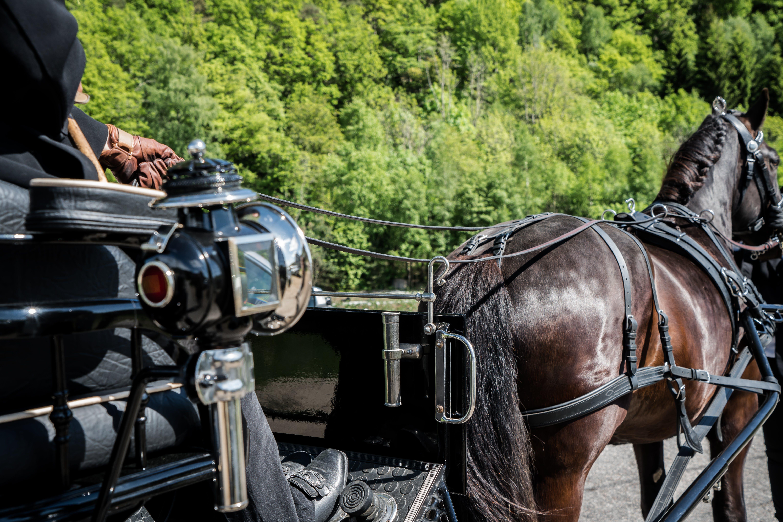 Kostenloses Stock Foto zu aufbau für eine hochzeit, hochzeit, pferd, reiten