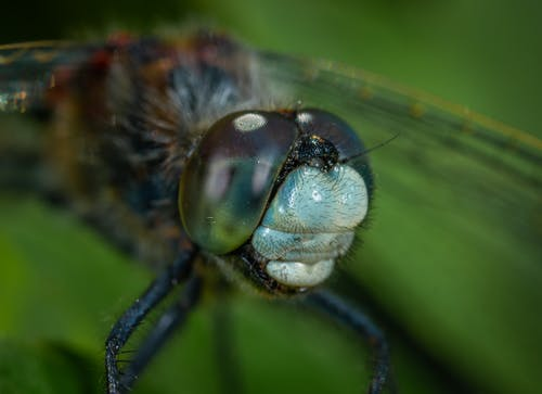 Free stock photo of dragonfly, insect, macro