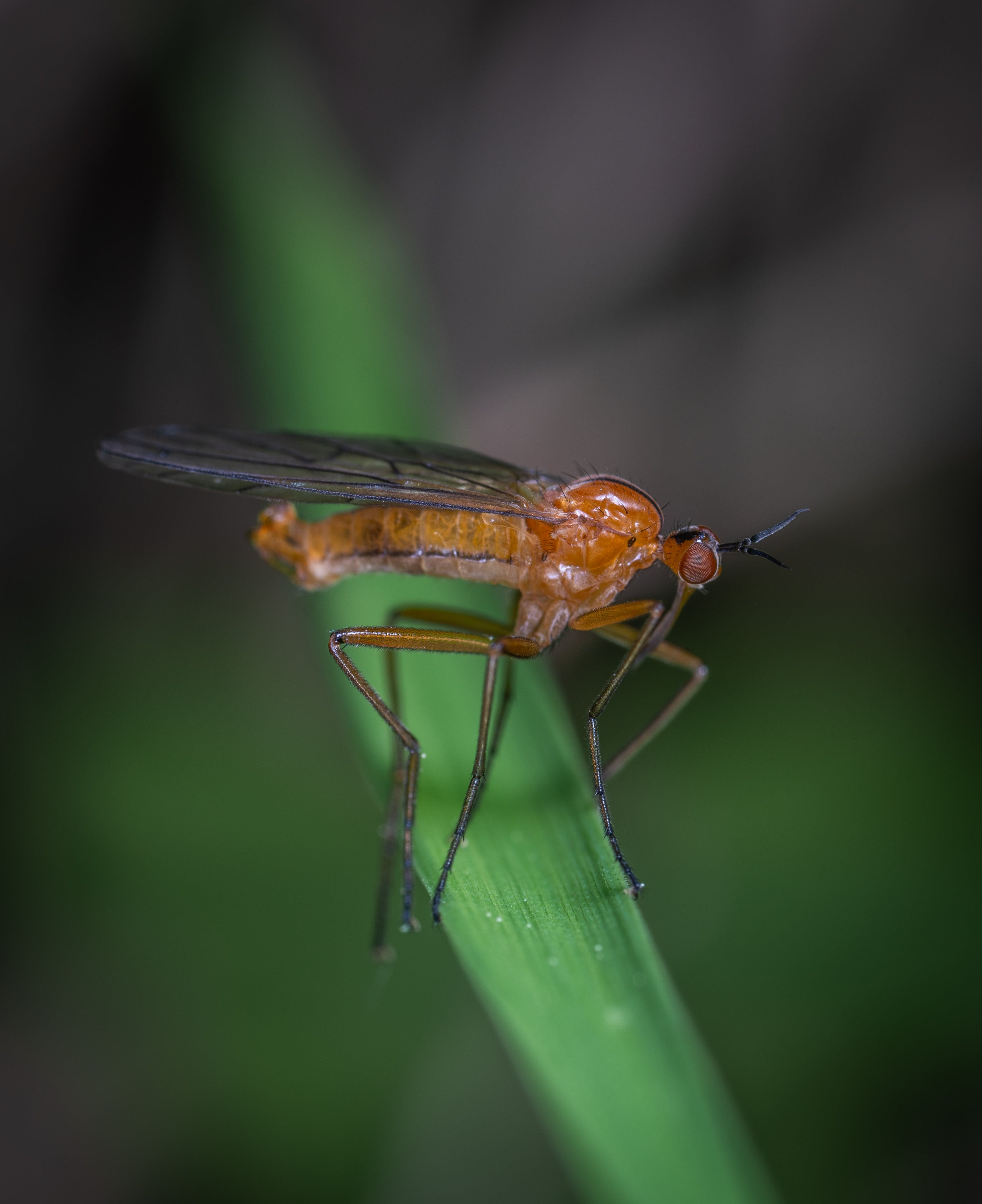Selective Focus Photography Of Robber Fly