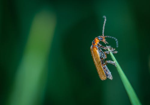 Macro Photo Of Insect