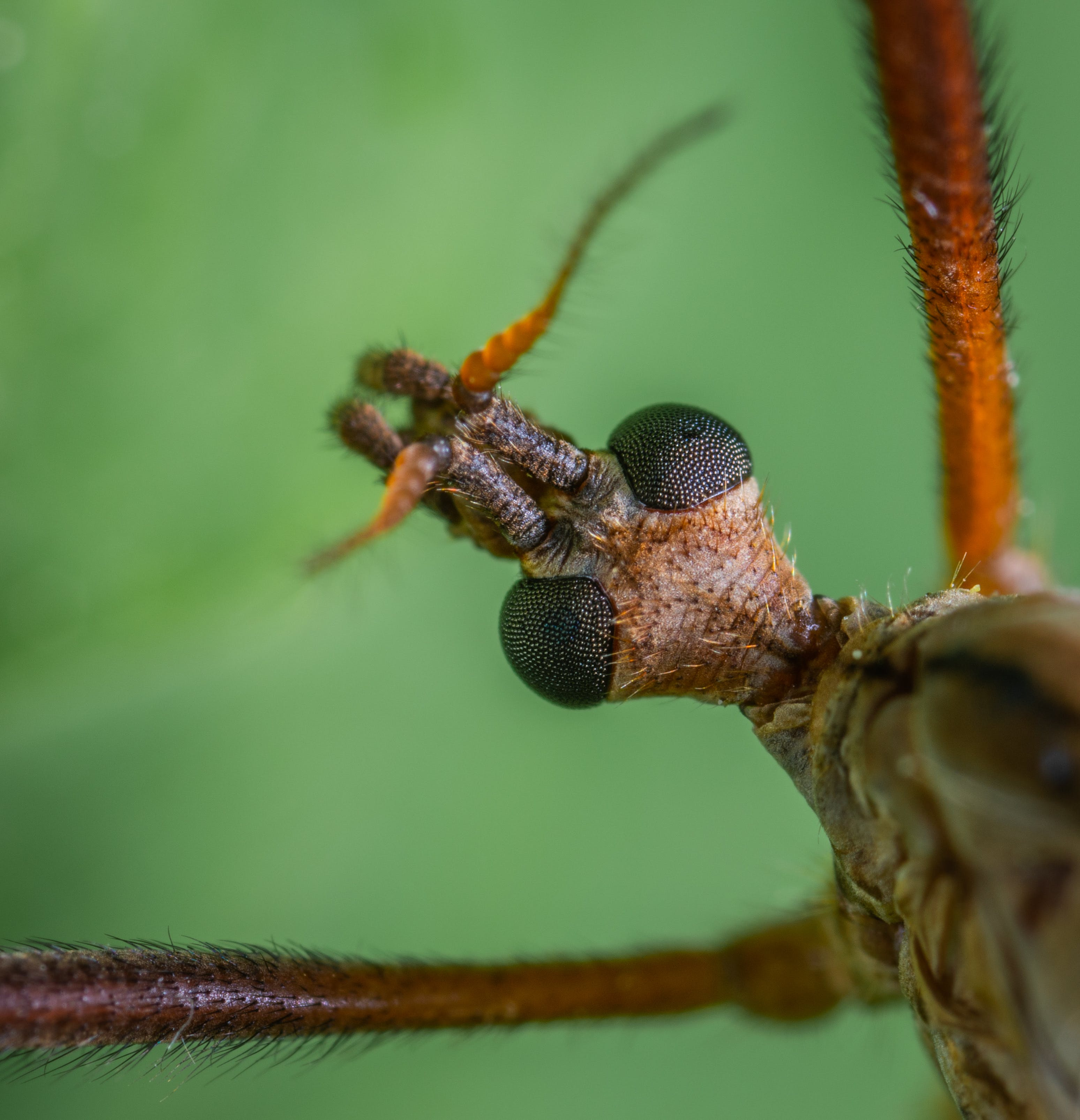 Macro Photography Of Insect