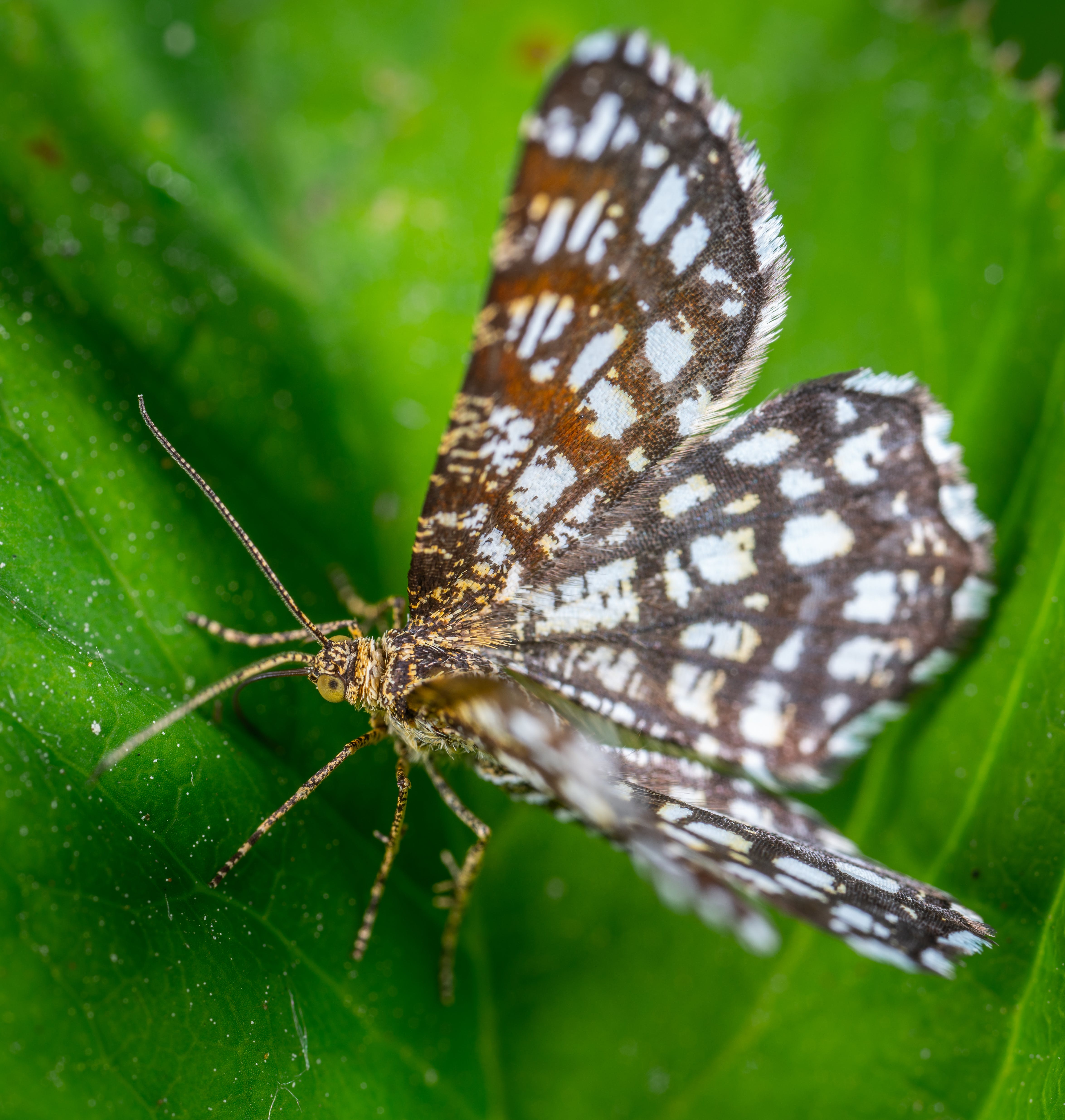 White And Brown Butterfly On Green Leaf