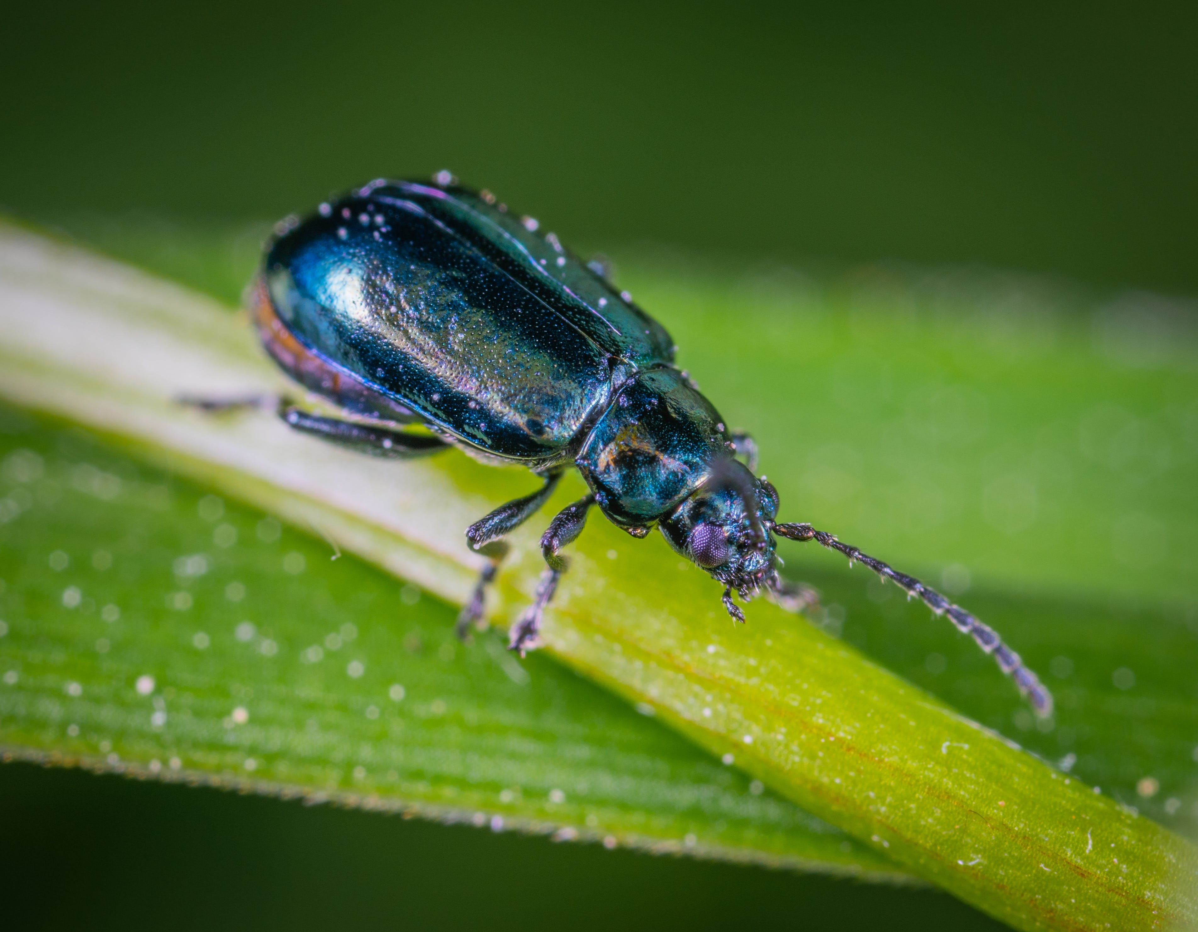 Beetle On Green Leaf In Close-up Photography