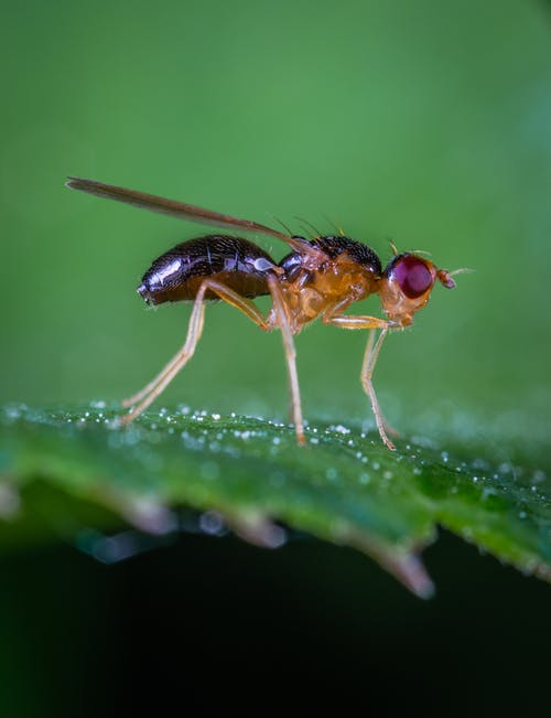 Macro Photo Of Robber Fly On Green Leaf