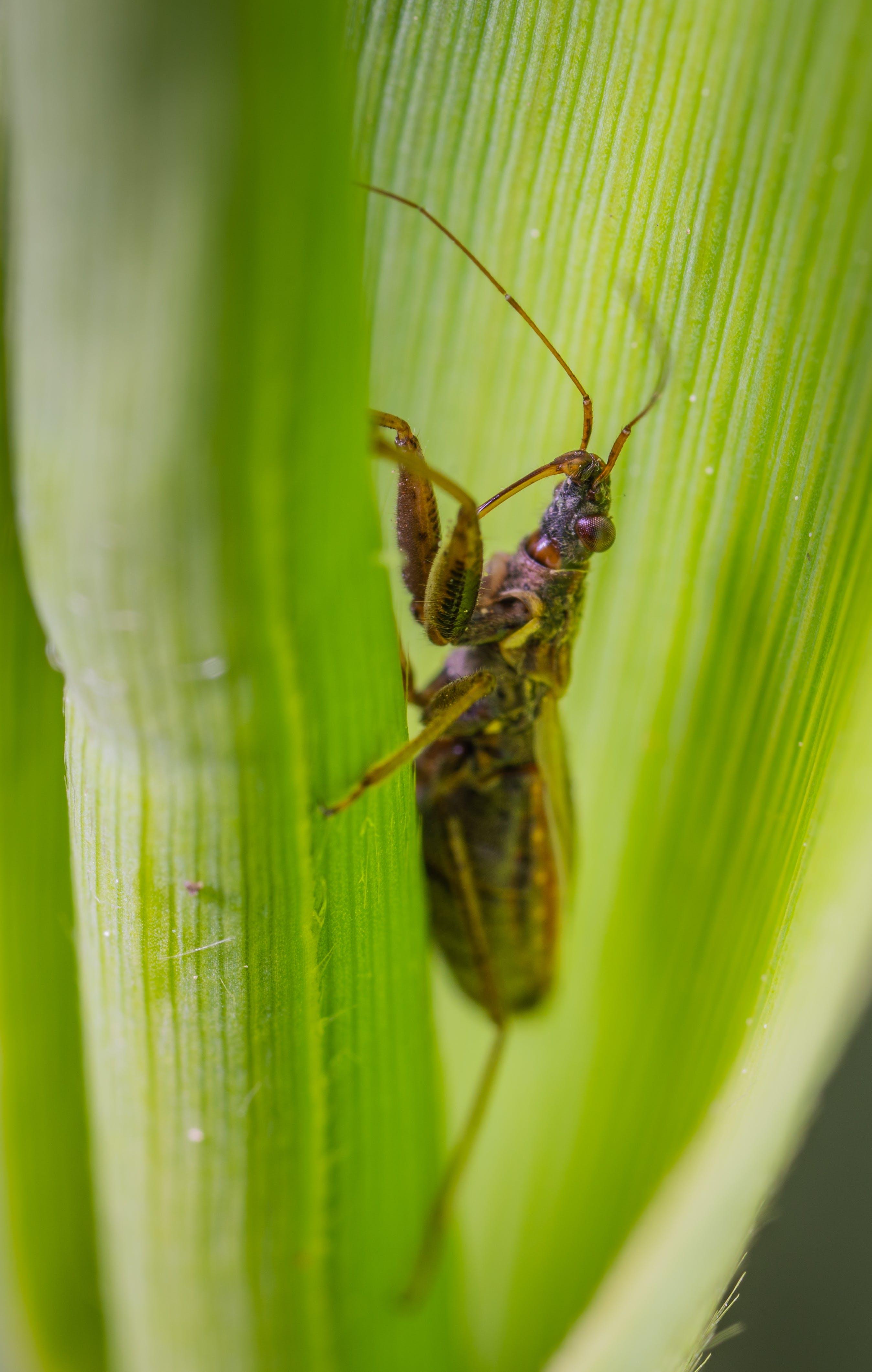 Free stock photo of insect, macro, bug