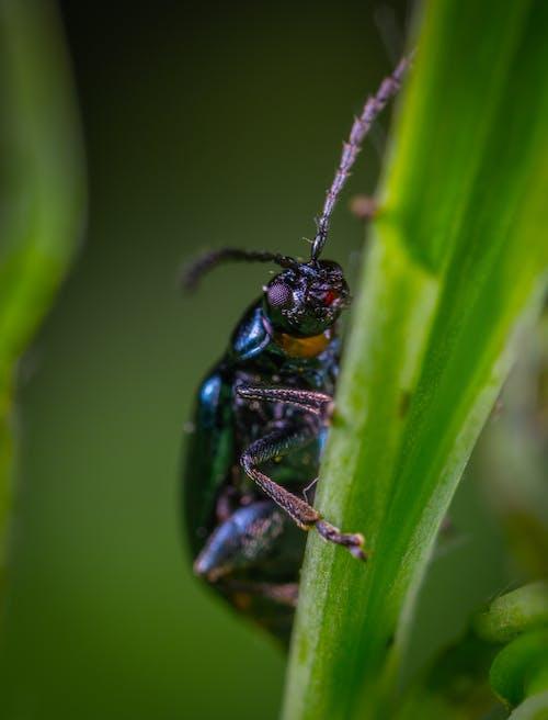 宏觀, 小, 小蟲, 昆蟲 的 免费素材照片