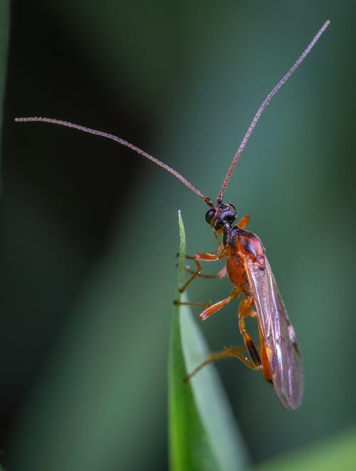 Δωρεάν στοκ φωτογραφιών με macro, αντένα, γκρο πλαν, έντομο