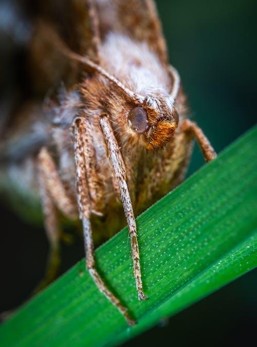 Gratis arkivbilde med hårete, insekt, liten, møll