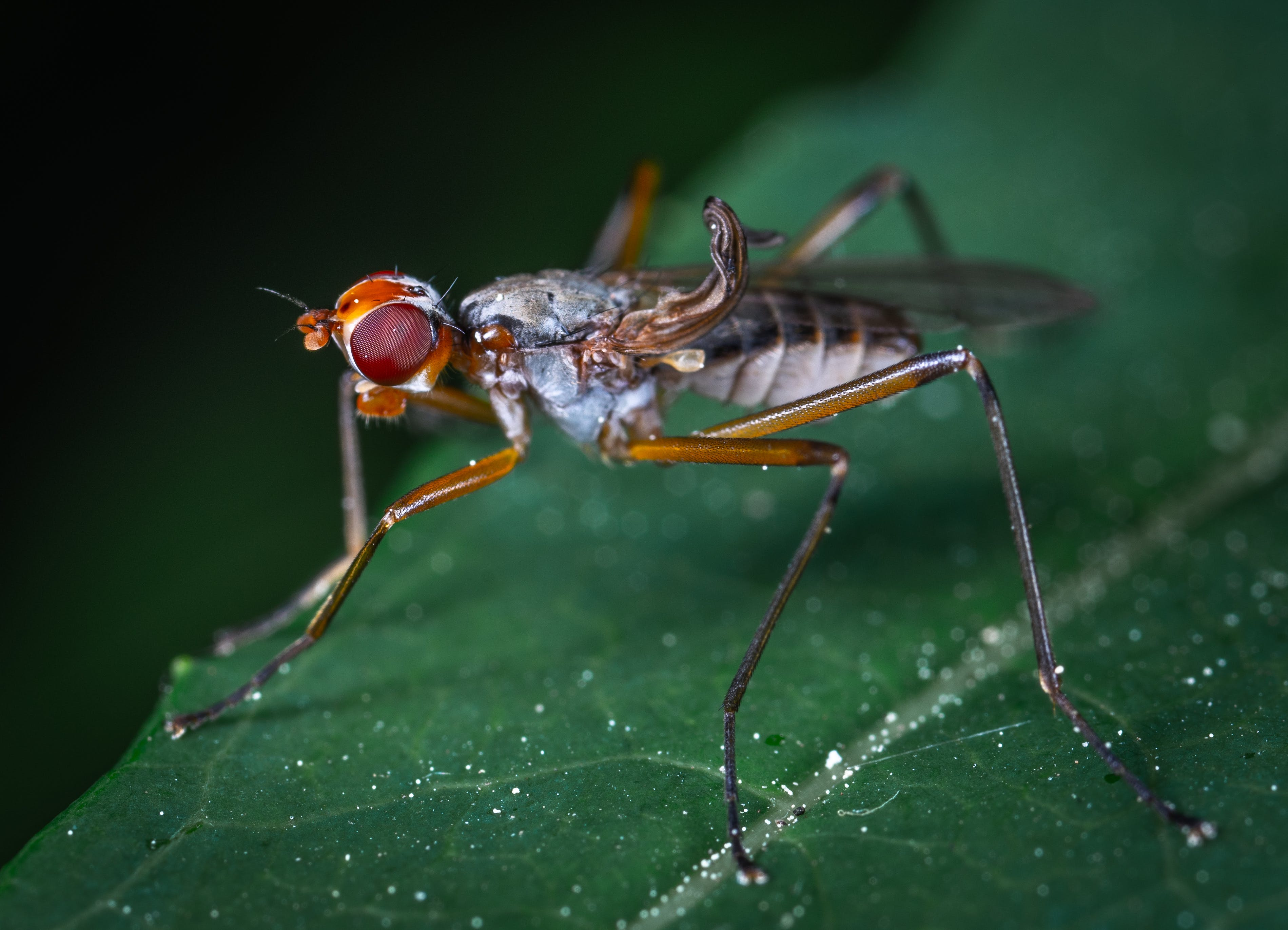 Macro Photography of Insect on Leaf