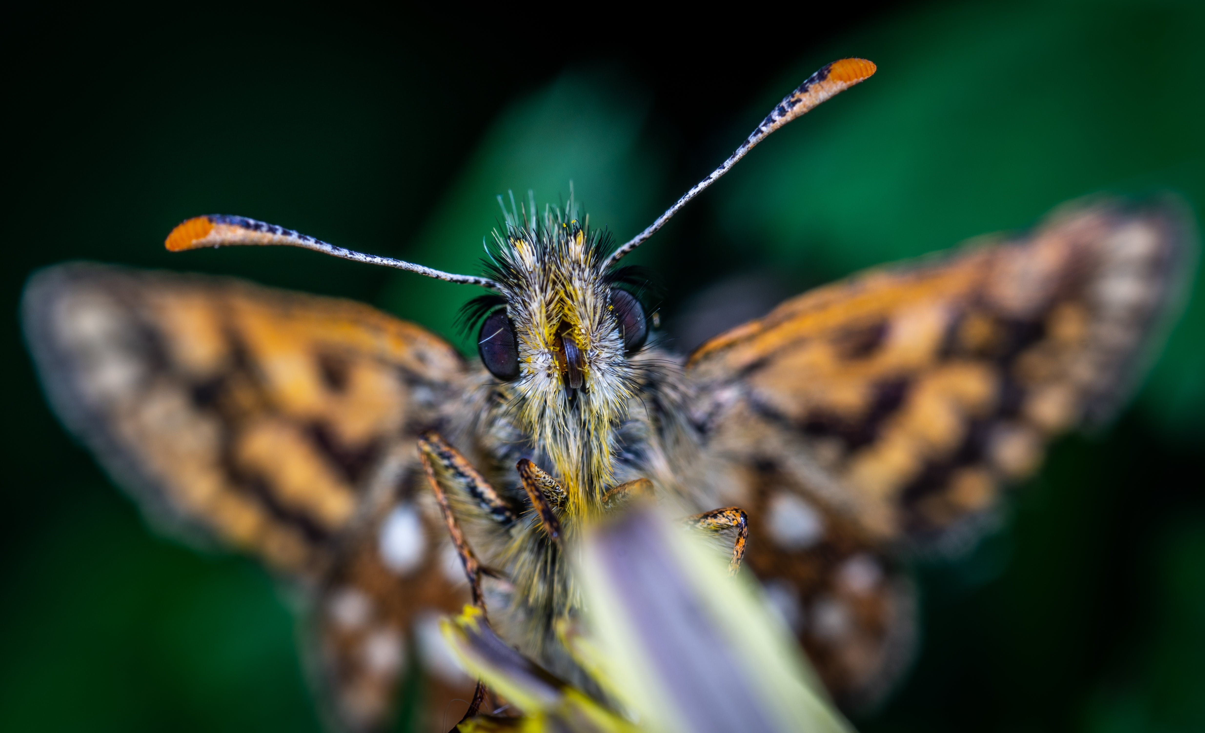 Selective Focus Photography Of Butterfly