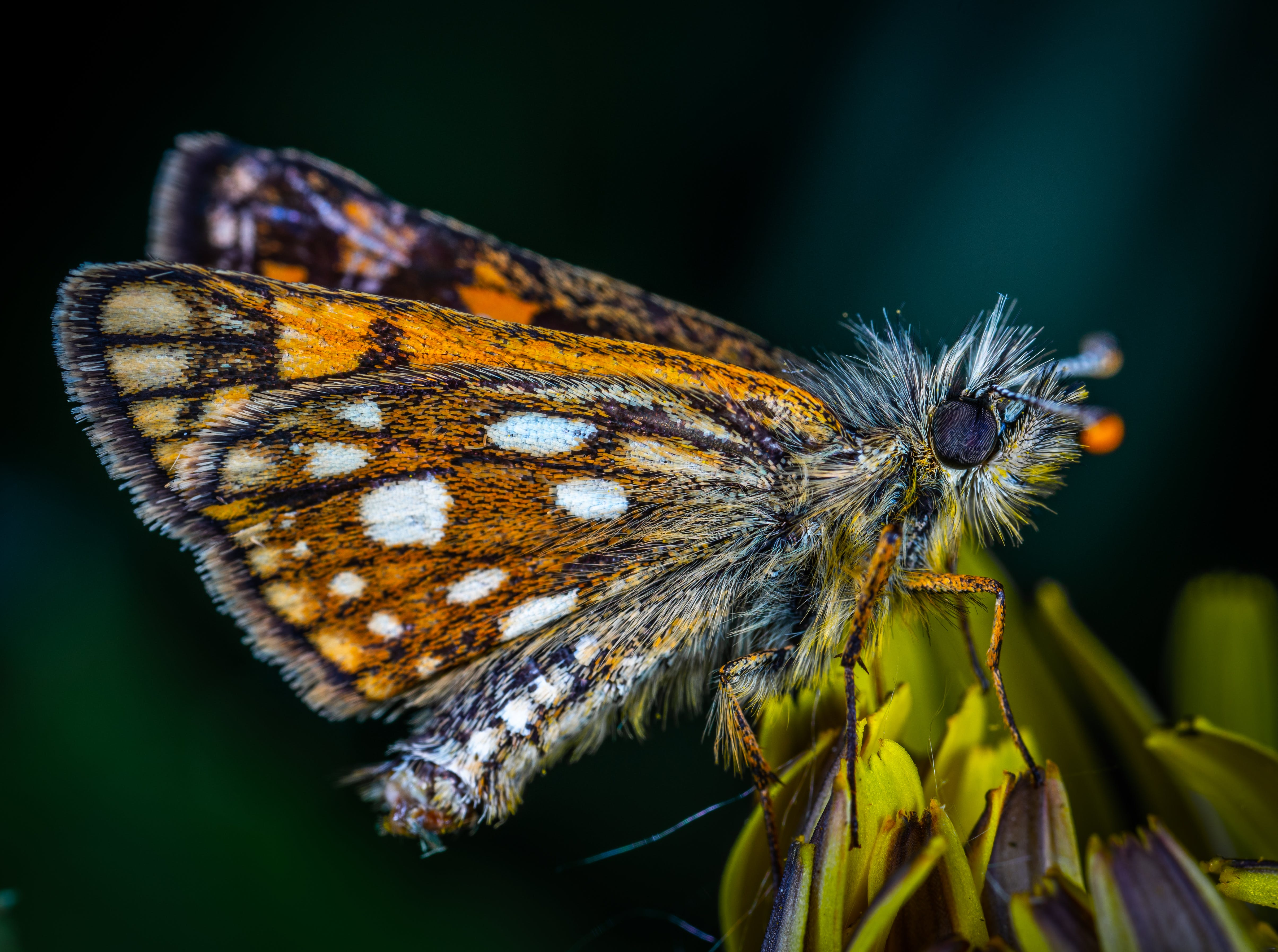 Macro Photo Of Butterfly