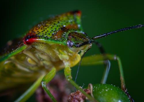 Close-up Photo Of Bug