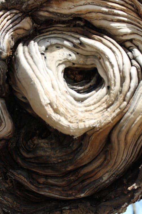 Free stock photo of tree knot