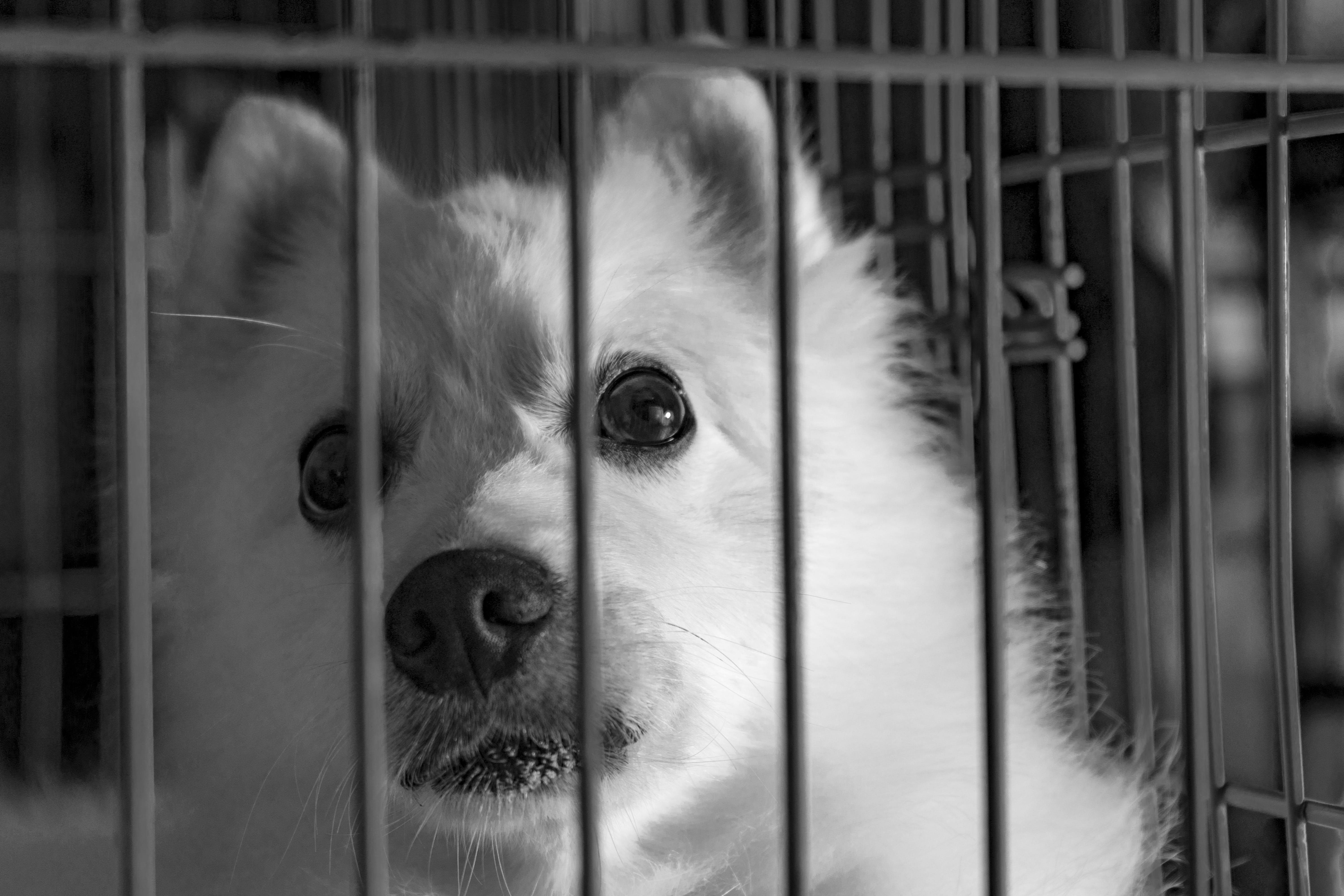 Grayscale Photography of Dog in Cage