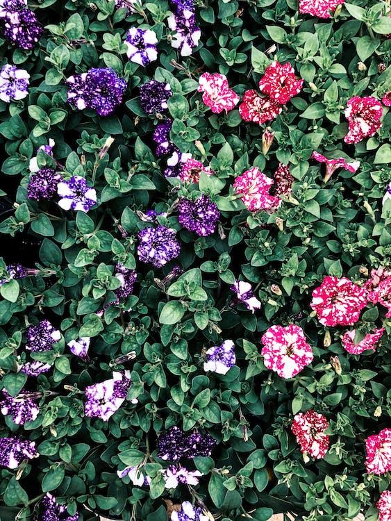 Multicolored Petaled Flowers