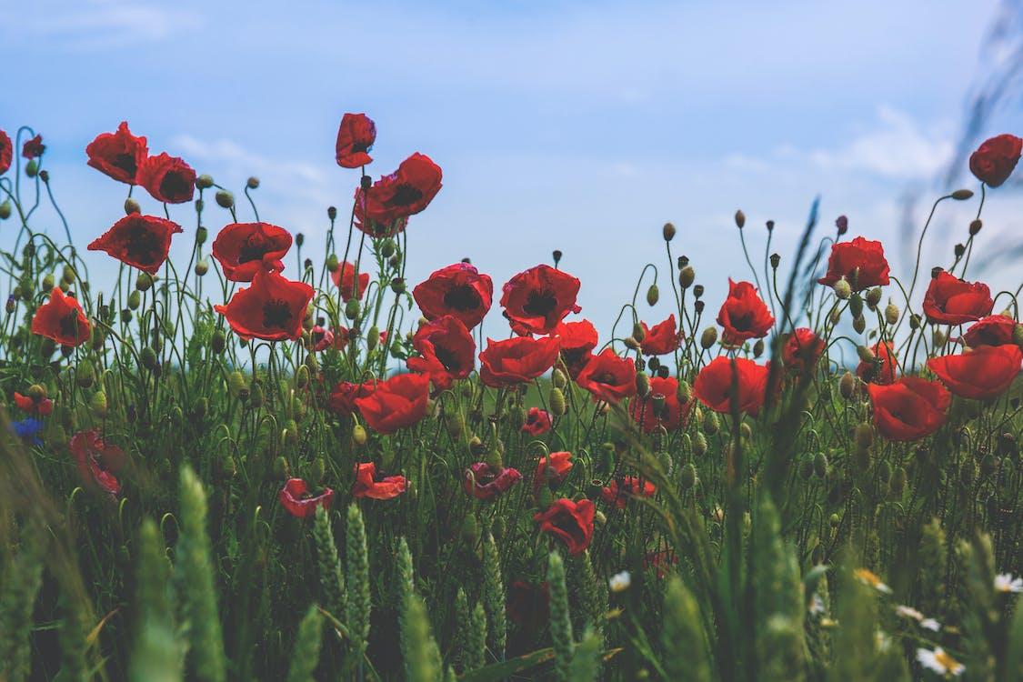 flóra, hřiště, kvést