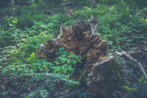 ağaç, ahşap, bitki örtüsü, bitkiler içeren Ücretsiz stok fotoğraf