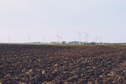 Kostenloses Stock Foto zu ackerland, kühe, windkraft, windkraftanlagen