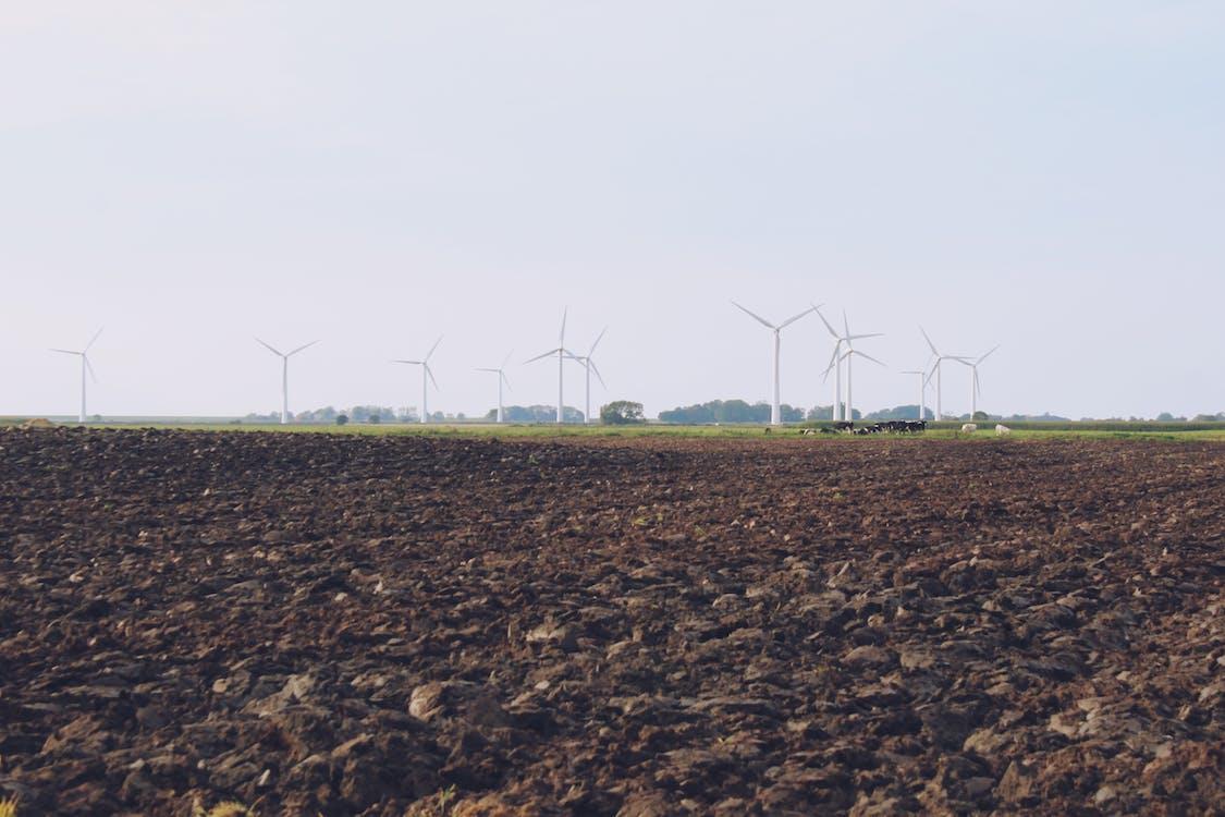 Kostenloses Stock Foto zu ackerland, kühe, windkraft