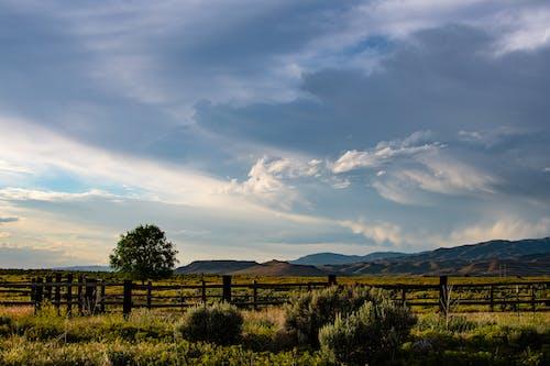 Gratis stockfoto met akkerland, bergen, boerderij, boom