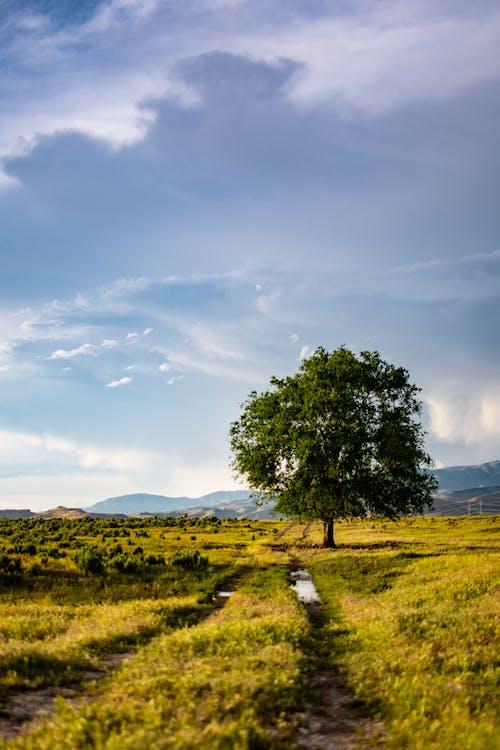 åkermark, bondgård, dagsljus