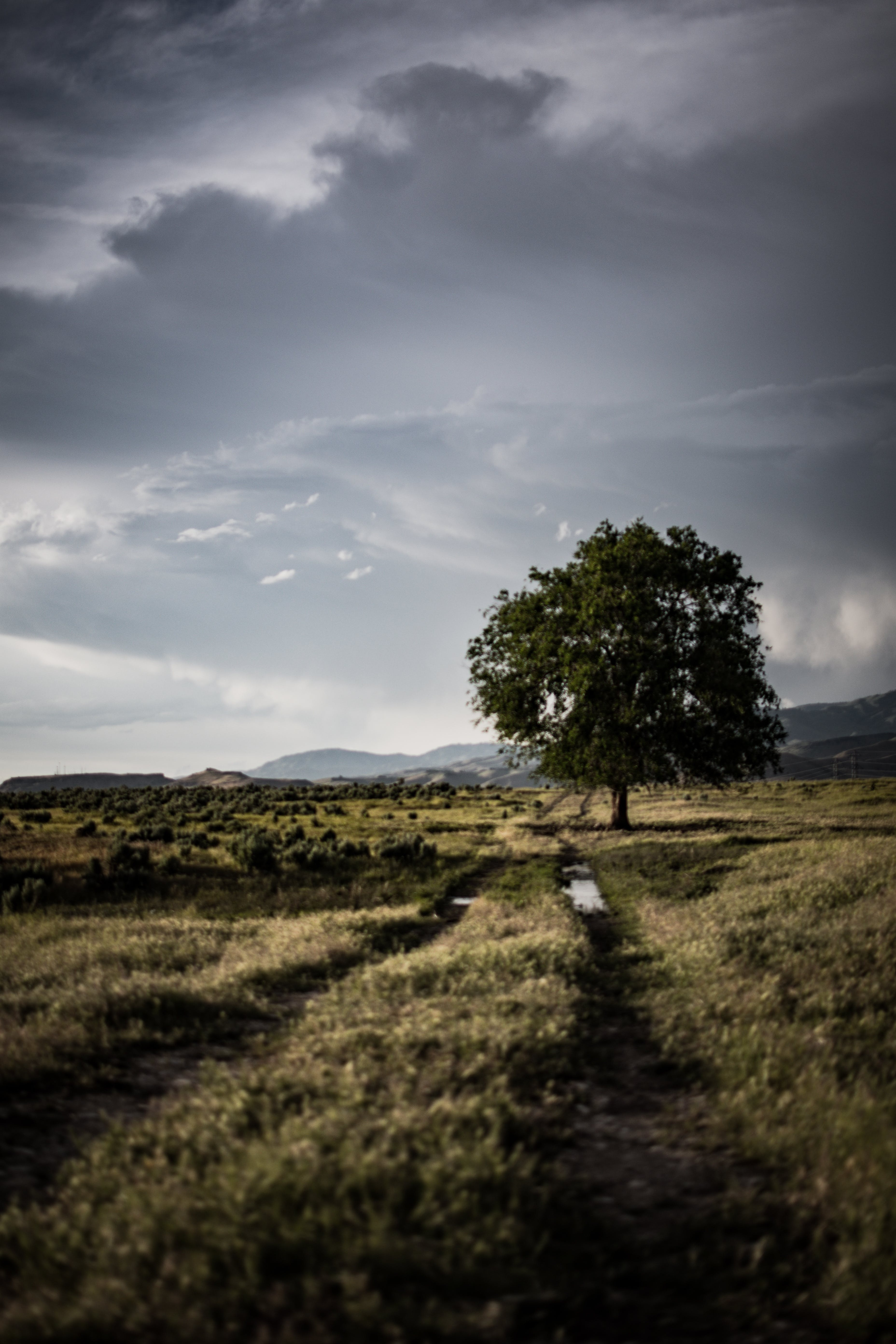 Lone Tree on Grass Field Under Cloudy Sky