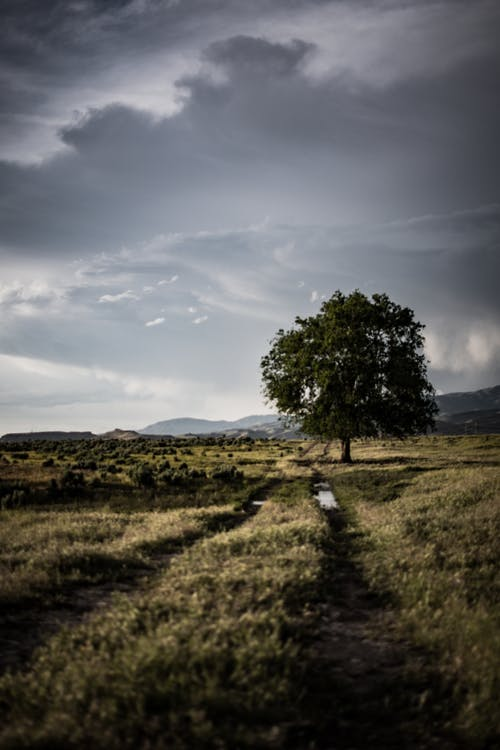 Lone Tree on Grass Field Under Cloudy Sky