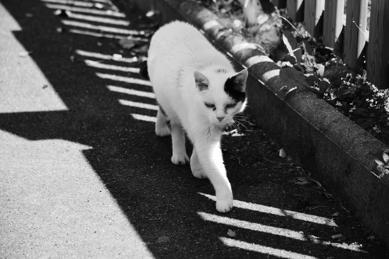 Δωρεάν στοκ φωτογραφιών με barrière, chat blanc, faune, ombre
