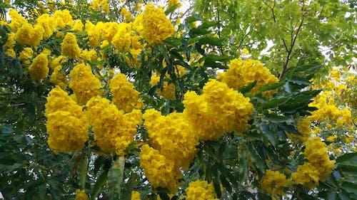 Безкоштовне стокове фото на тему «жовті квіти»