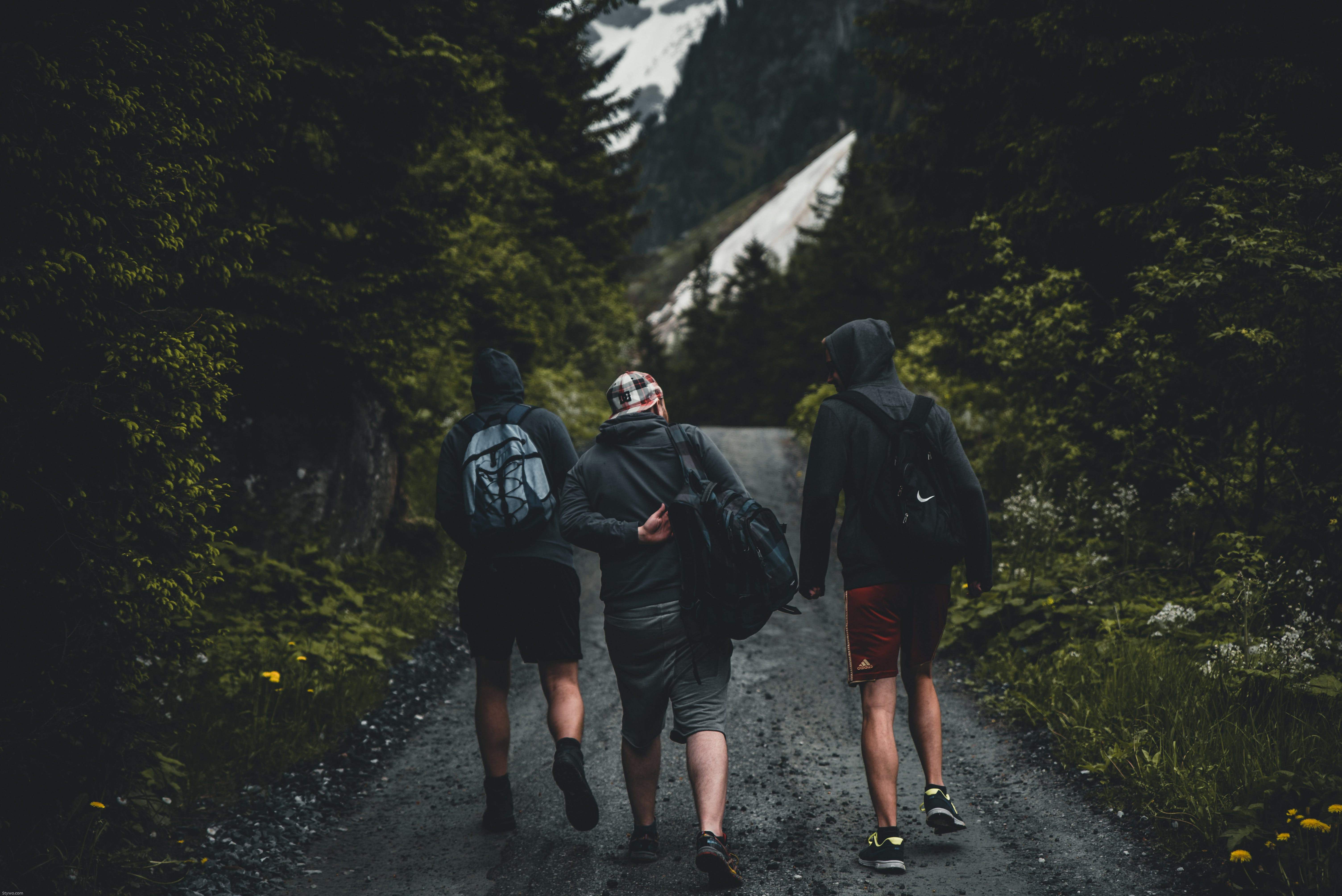 Three Men Walking on Road Between Tall Trees
