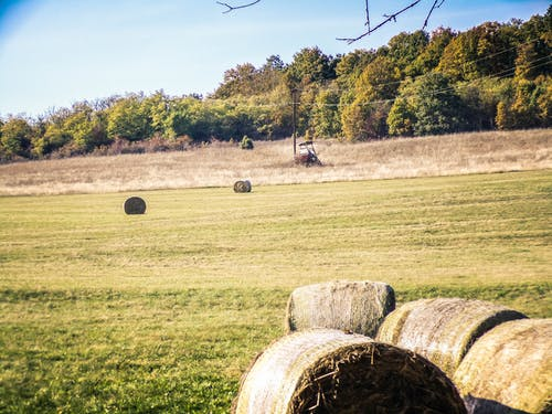 Free stock photo of country, countyside, field, hay