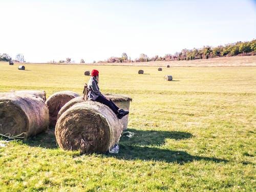 countyside, 乾草, 乾草堆 的 免费素材图片